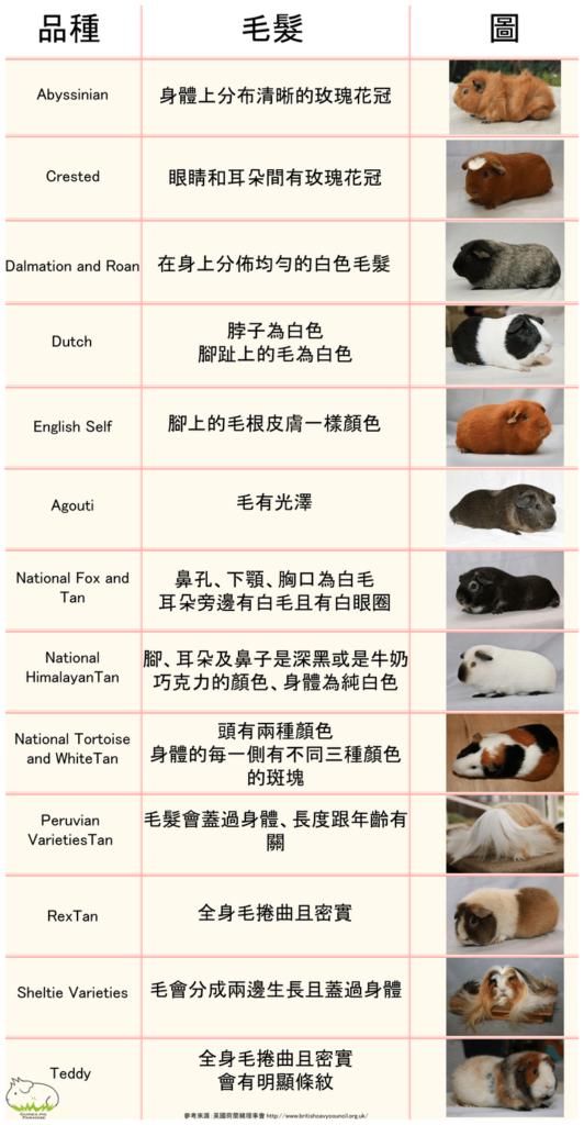 天竺鼠品種比較
