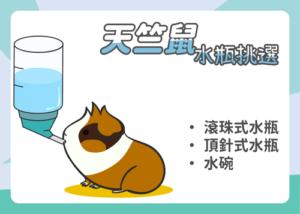 天竺鼠水瓶挑選