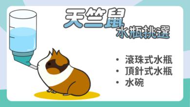 Photo of 天竺鼠水瓶挑選-3種常見寵物用飲水器