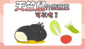 天竺鼠蔬菜封面