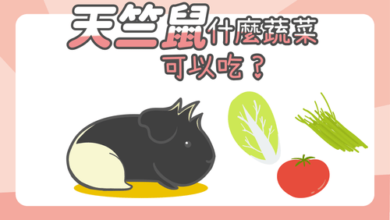 Photo of 天竺鼠蔬菜食物大解密-小心2類不適合天竺鼠的蔬菜
