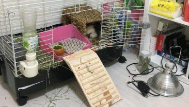 Photo of 天竺鼠籠子環境-天竺鼠也想住豪宅!