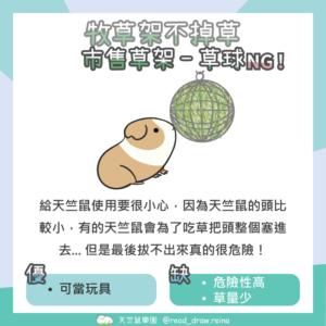 天竺鼠草球