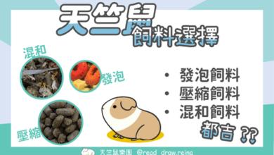 Photo of 天竺鼠飼料-挑選飼料的5大重點