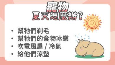 Photo of 天竺鼠夏天怎麼消暑?5種方法幫助天竺鼠度過夏天