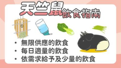 Photo of 天竺鼠飲食指南-一次了解每天該吃什麼