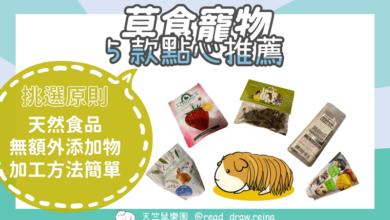 Photo of 推薦5款兔子及天竺鼠的點心零食