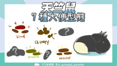 Photo of 7種天竺鼠大便-千萬不要錯過大便發出的警訊