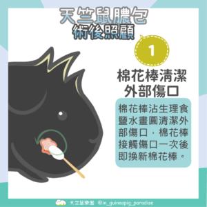 天竺鼠膿包傷口清潔步驟1