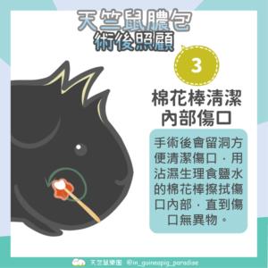 天竺鼠膿包傷口清潔步驟3