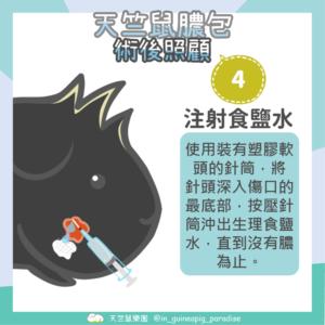天竺鼠膿包傷口清潔步驟4