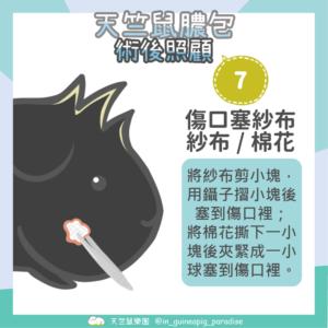 天竺鼠膿包傷口清潔步驟7