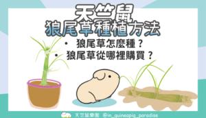 狼尾草種植方法