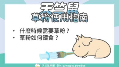 Photo of 天竺鼠草粉餵食方法,什麼情況需要使用草粉?