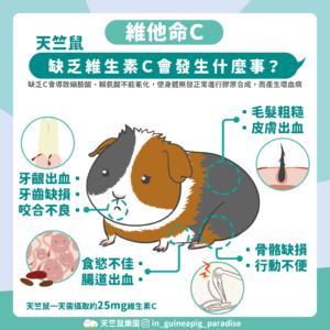天竺鼠缺乏維他命C疾病