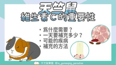 Photo of 天竺鼠為什麼需要維他命C?不可不知的營養素