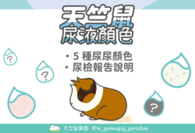 Photo of 天竺鼠尿液顏色-5種尿液顏色大解密