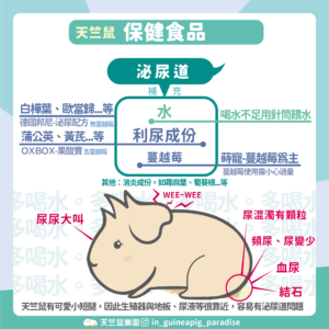 天竺鼠泌尿道膀胱保健