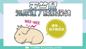 天竺鼠泌尿保健封面blog