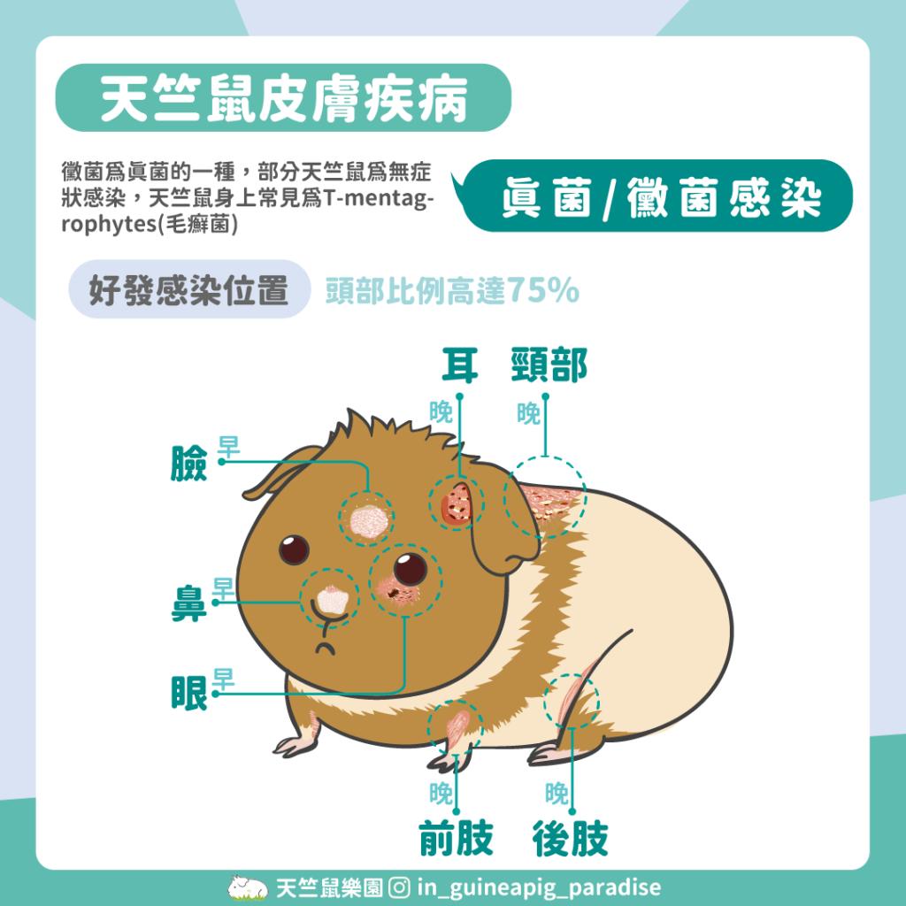 天竺鼠黴菌發生位置