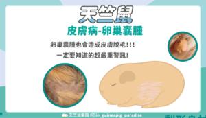 天竺鼠卵巢囊腫封面