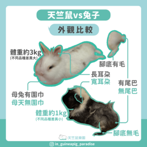 天竺鼠兔子外觀比較