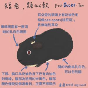 天竺鼠品種-otter
