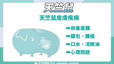 Photo of 8種天竺鼠掉毛的原因,天竺鼠脫毛怎麼辦?