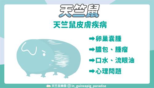 天竺鼠皮膚疾病
