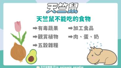 Photo of 天竺鼠不能吃什麼?造成天竺鼠危險的5類食物