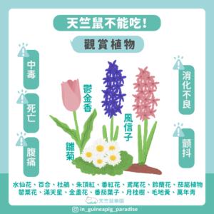 天竺鼠不能吃花朵植物