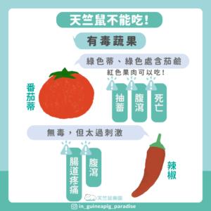 天竺鼠不能吃辣椒番茄蒂