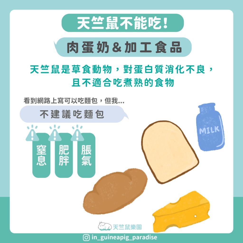 天竺鼠不能吃蛋豆魚肉加工食品