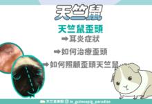 Photo of 天竺鼠為什麼歪頭?如何治療和照顧歪頭天竺鼠