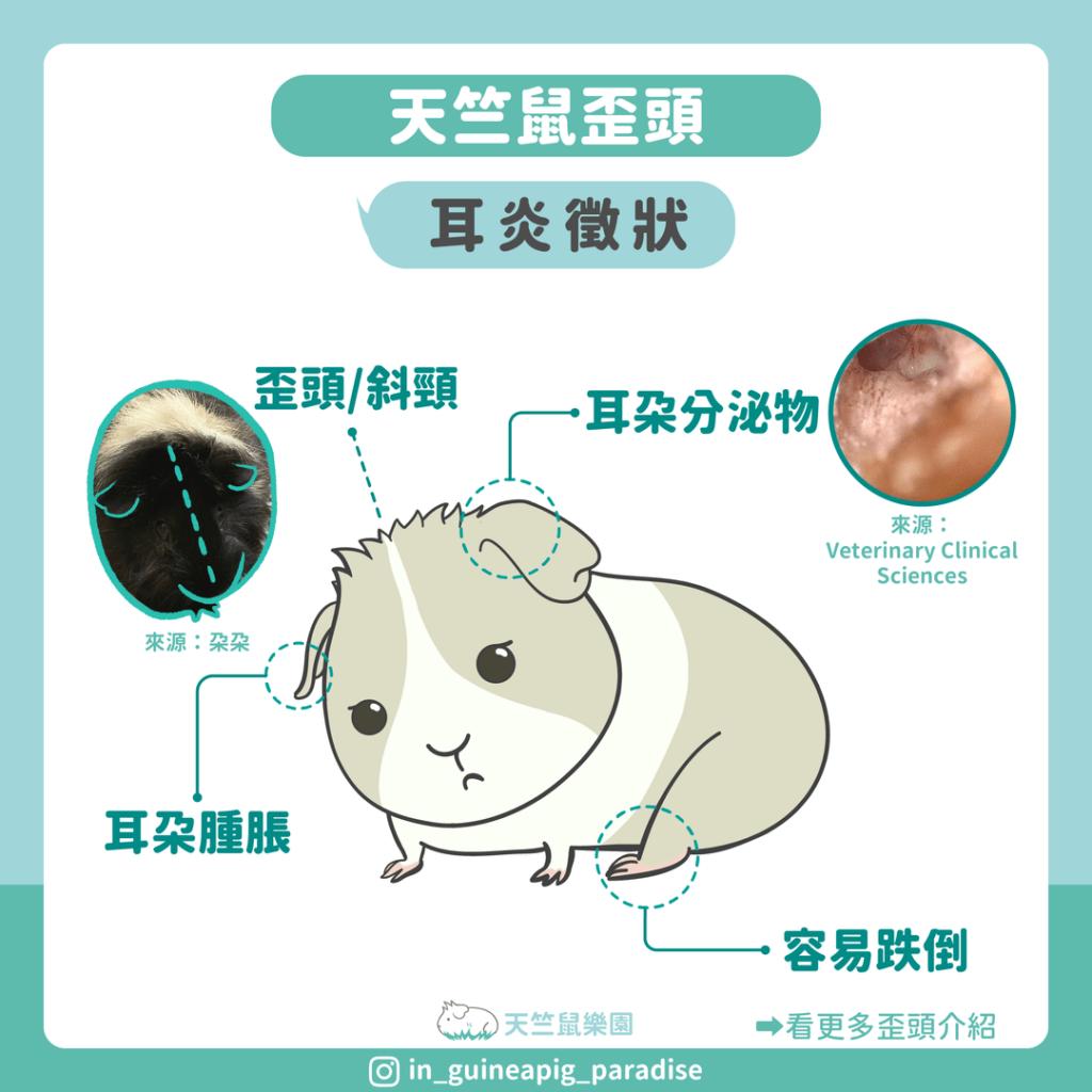 天竺鼠歪頭耳炎症狀