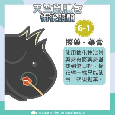 天竺鼠膿包傷口清潔步驟6-1
